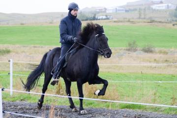 Dimma frá Kílhrauni, knapi Guðmann Unnsteinsson